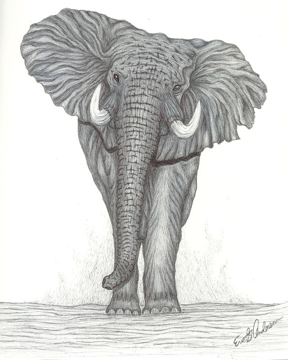Elephant from Eric Anderson
